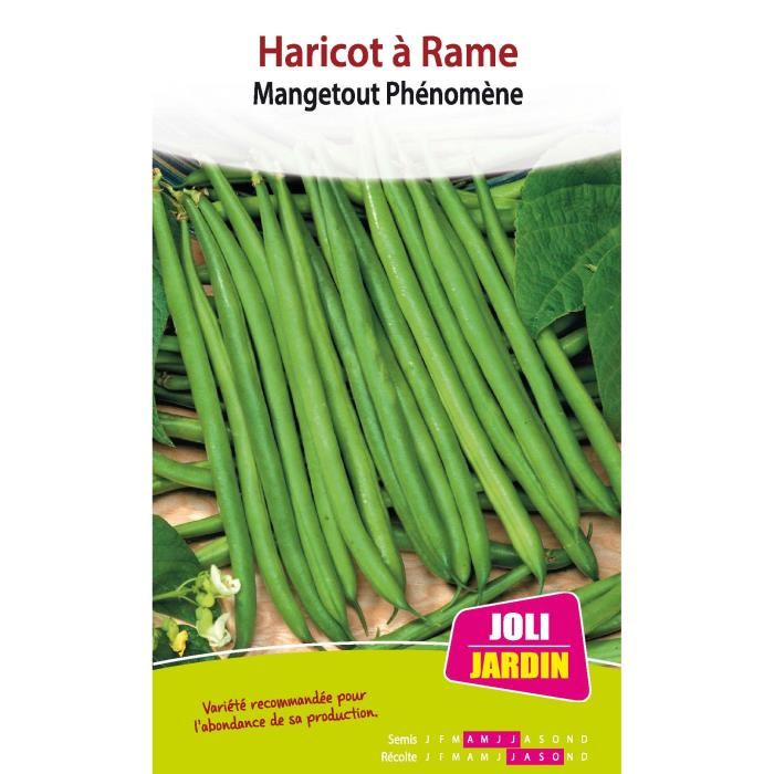 Haricots a rame aucune pickture - Haricot a rame ...